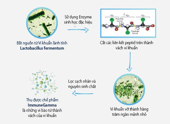 qua-trinh-chiet-xuat-immune-gamma