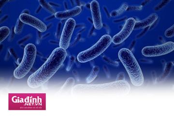 Hội chứng ruột kích thích dùng men vi sinh hay bào tử lợi khuẩn liệu có đủ?